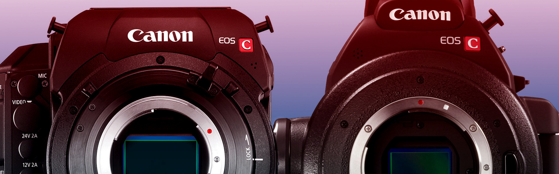 Header image for article Canon Camera Accessory Guide
